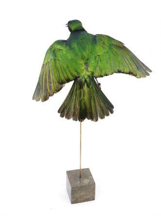 The shop for quality bird taxidermy, buy here your mounted bird - De winkel voor opgezette vogels - koop hier je geprepareerde vogel.