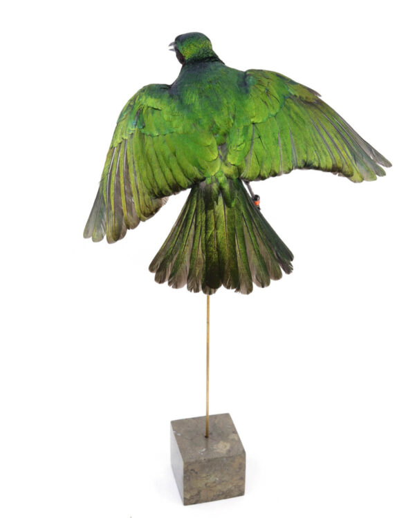 The shop for quality bird taxidermy, buy here your mounted bird - De winkel voor opgezette vogels - koop hier je geprepareerde vogel.