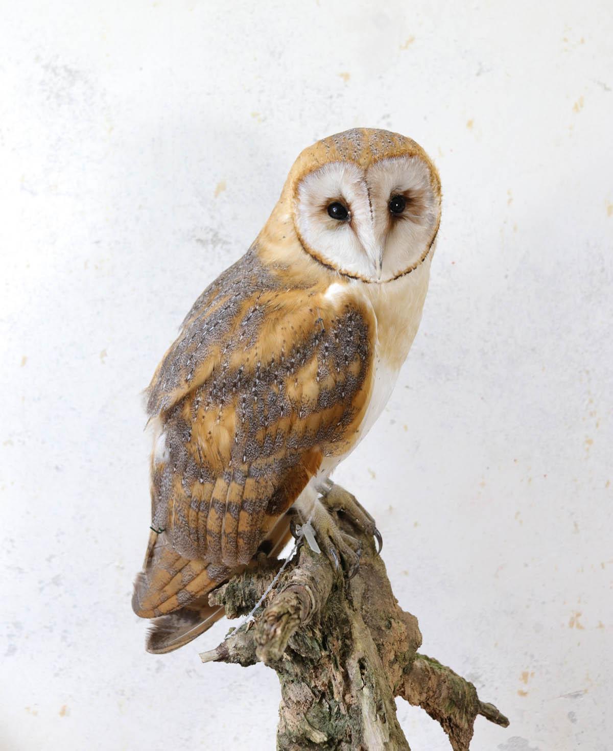 owlcom
